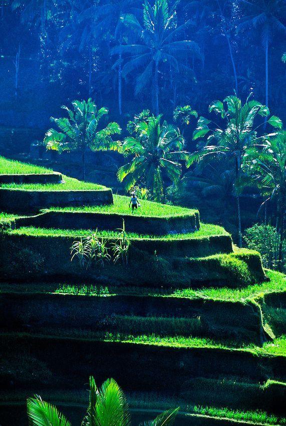 Rice Terraces near Sebatu, Bali So Beautiful!