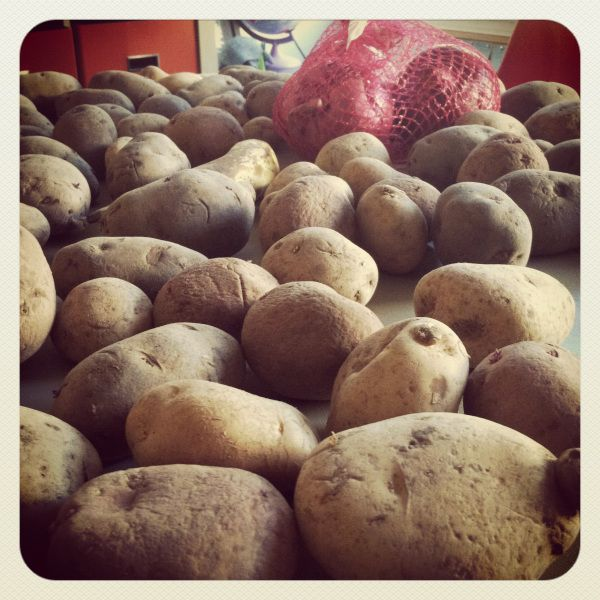HOW TO GROW YOUR SPUDS Welcome to everything you could want to know about growing organic potatoes in a trash can! Potatoes grow from potatoes seeds, which are bred to grow new potatoes. You don&#8…