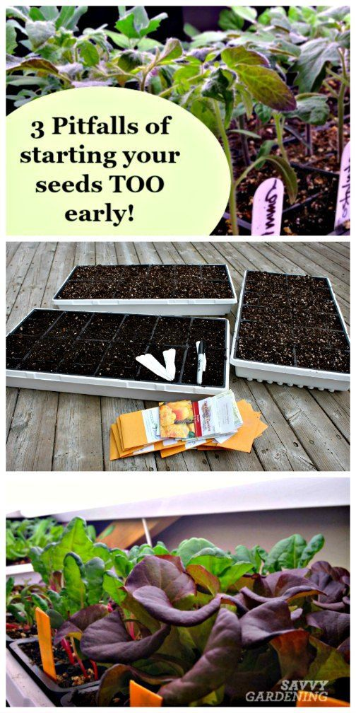 3 Pitfalls Of Starting Your Seeds Too Early | Savvy Gardening