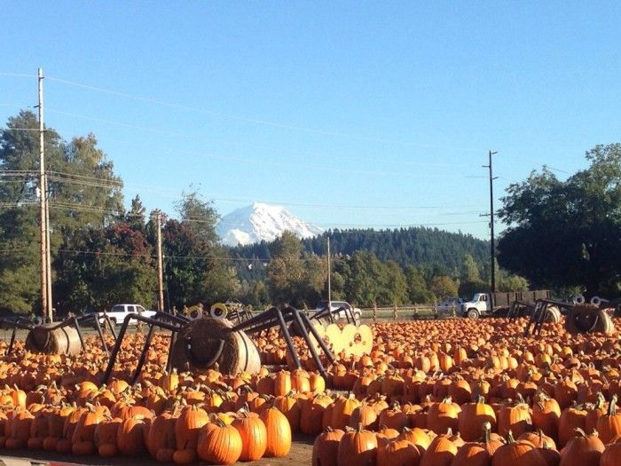 Don't Miss These 12 Great Pumpkin Patches In Washington This Fall