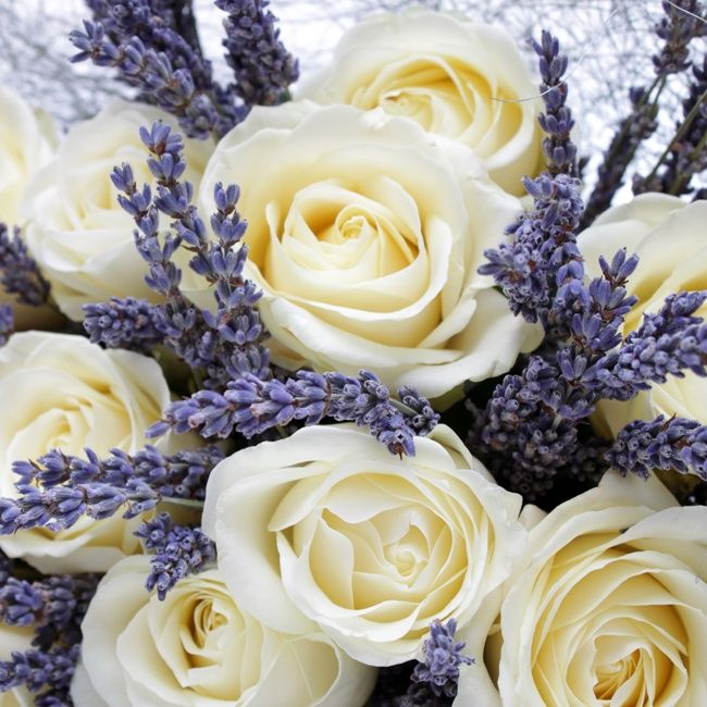 White roses with Lavender.