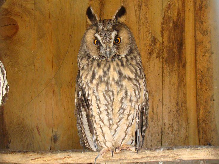 La France abrite des oiseaux extraordinaires… Découvrez 34 espèces d'une beauté majestueuse | Daily Geek Show