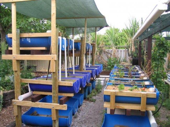 Barrel Aquaponic Systems Backyard Aquaponics Blue 640 x 480