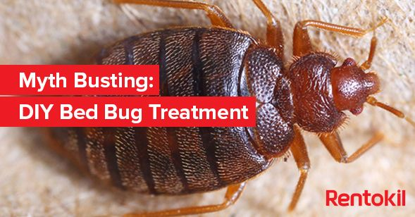 Myth Busting: DIY Bed Bug Treatment #pestcontrol #bedbugcontrol
