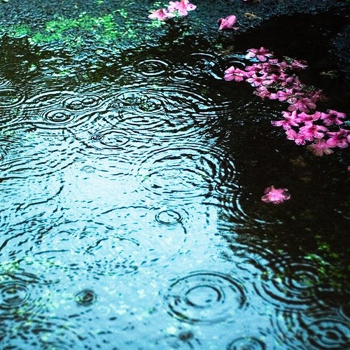 Color in the rain. April showers bring May rain... and some flowers