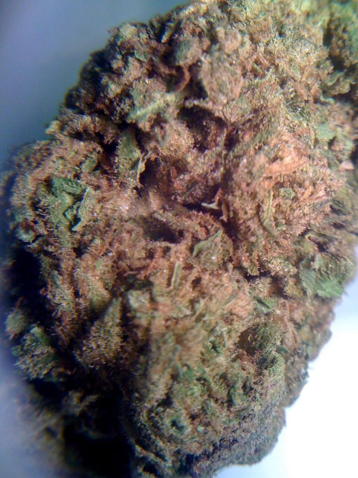 bubblegum strain http://www.leafly.com/hybrid/bubble-gum