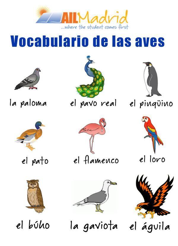 Spanish vocabulary. Vocabulario en español.
