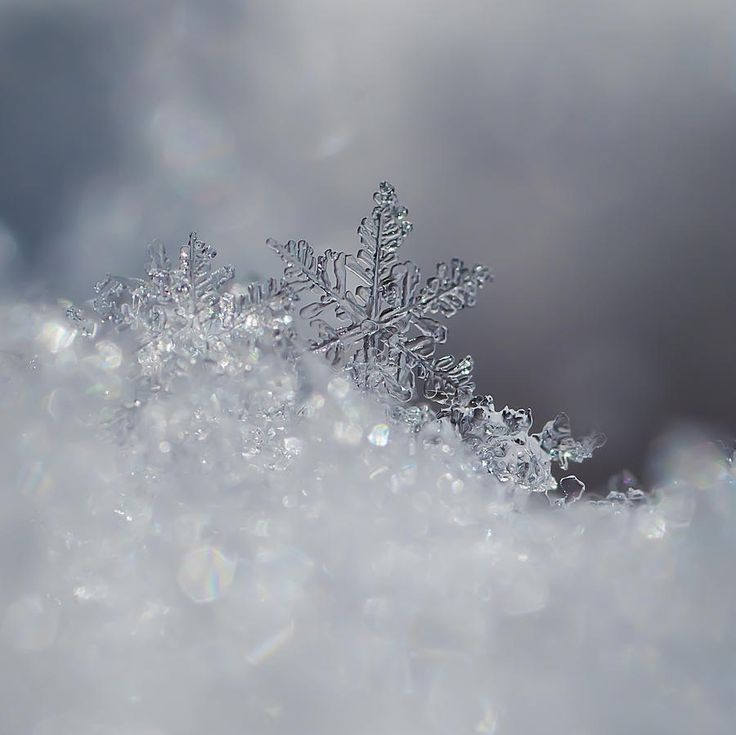 real snowflakes background - photo #32