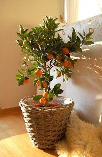 Nora Tellåsen: Appelsintre