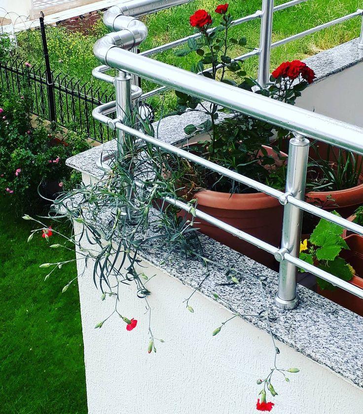 Balkonum şenlendi...#balkon#bahçe#çicek#gül#karanfil#arapyasemini#begonvil#çilek#aslanağzı#salatalık#biber#domates �������������������������� http://turkrazzi.com/ipost/1521076386415287066/?code=BUb8uoYhJsa