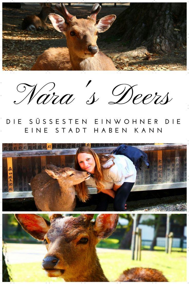 Nara's Deers - Die süßesten Einwohner die eine Stadt haben kann  Nara ist eine Stadt in Japan und vor allem für seine süßen Bewohner, die Hirsche und Rehe, Nara's Deers, bekannt.