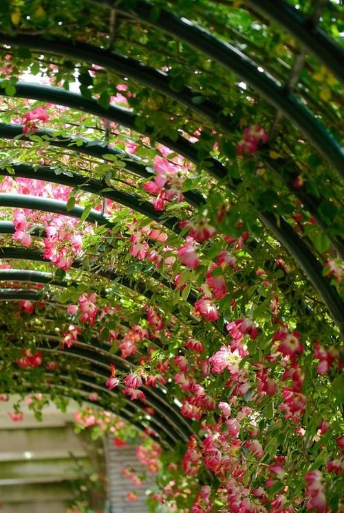 Imagine walking through this archway...<3