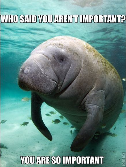 b68ad999c8c484176996aba751118fd6 endangered sea animals endangered species 13 best manatee memes images on pinterest manatees, calming and