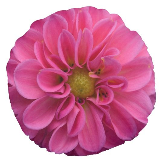 Pink Dahlia Round Throw Pillow by www.zazzle.com/htgraphicdesigner* #zazzle #gift #giftidea #dahlia #throw #pillow #throwpillow #pink #round #homedecor