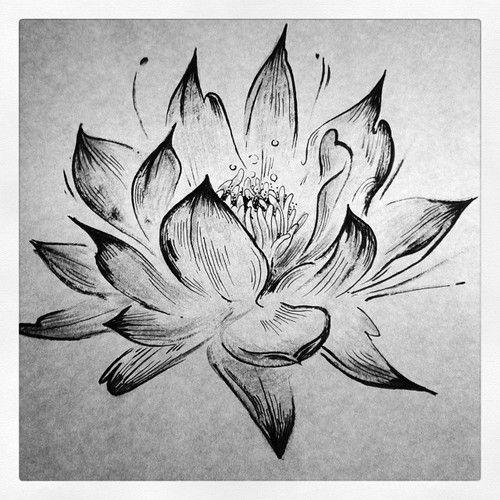 black and white lotus flower sketch