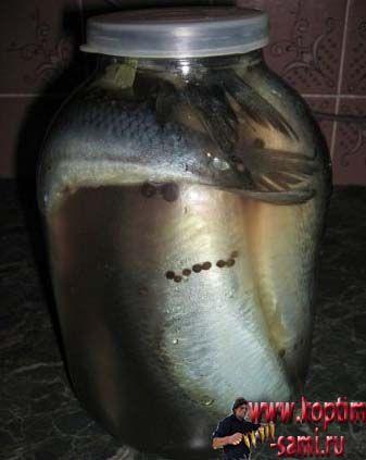 Рецепт засолки селедки