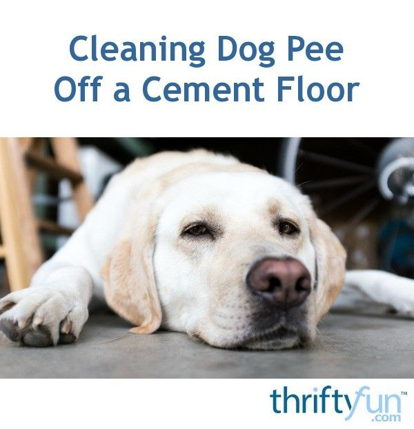 Cleaning Dog Off A Cement Floor