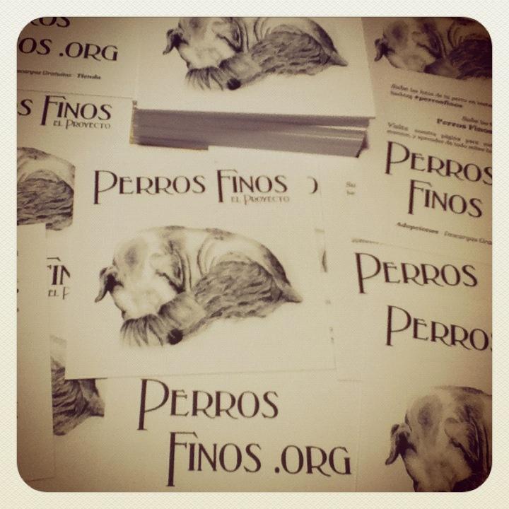 www.perrosfinos.org #perrosfinos
