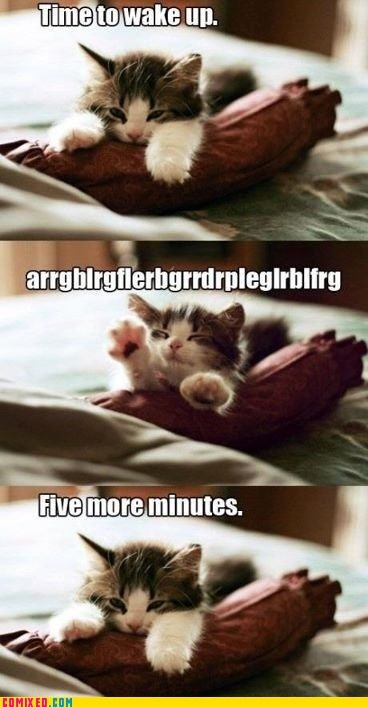 yup that's me EVERY morning: Cute Cats, Everyday
