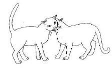 8 best cat body language images on pinterest  crazy cat