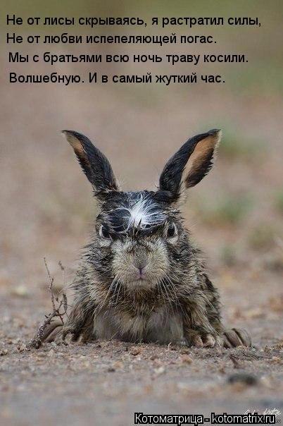 Котоматрица: Не от лисы скрываясь, я растратил силы, Не от любви испепеляющей погас. Мы с братьями всю ночь траву косили. Волшебную. И в самый жуткий час.