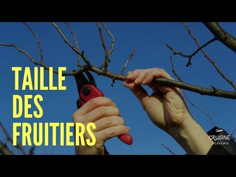 COMMENT BIEN TAILLER LES ARBRES FRUITIERS (taille trigemme) - YouTube