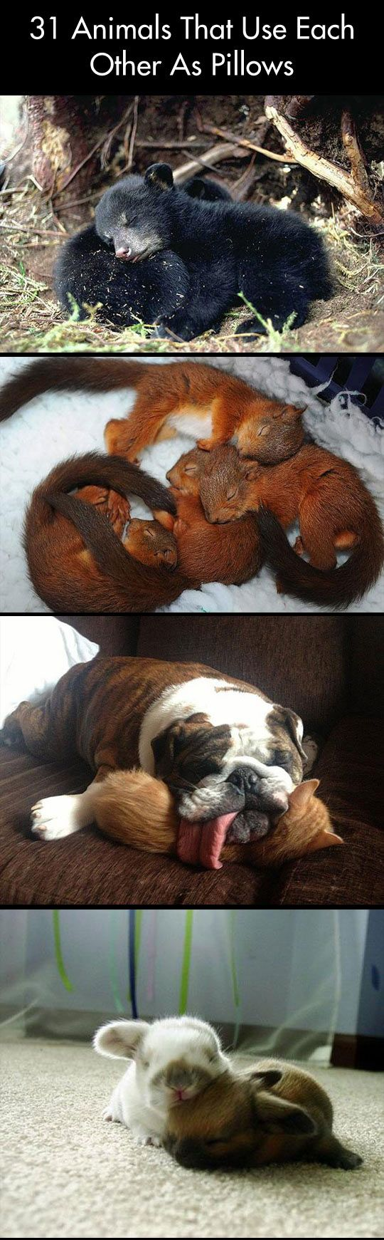 Pictures of animals that use each other as pillows…