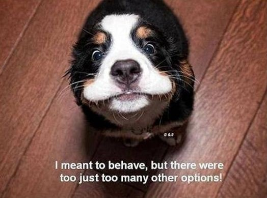 how to make a dog behave