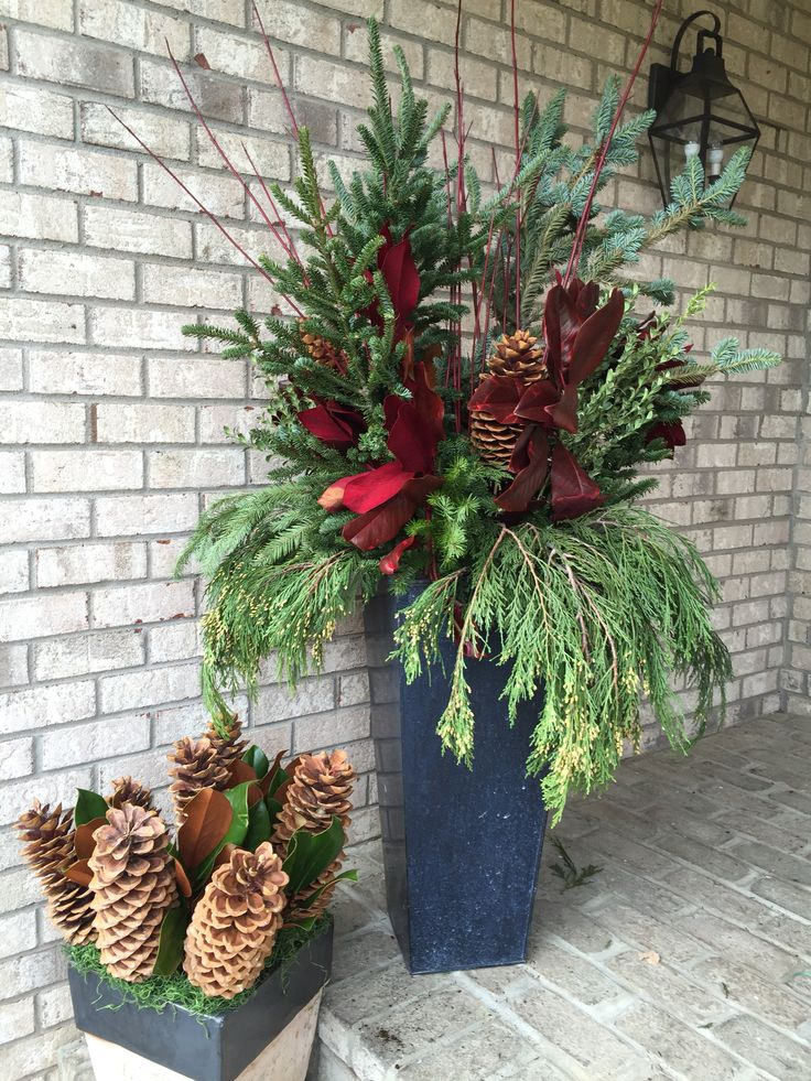 Spruce tip planters for the Holidays