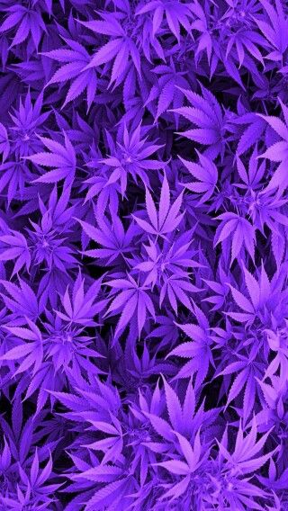Blue Weed Plant Wallpaper