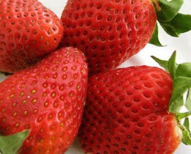 Frutillas Organicas