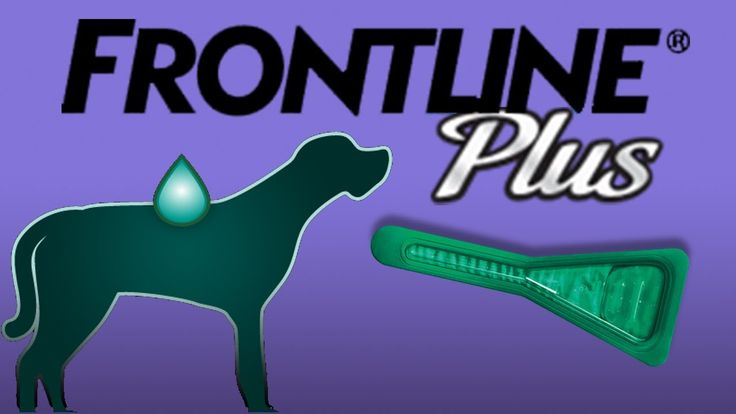 Video Frontline Plus for Dogs and Cats Kills Flea and Tick by Merial