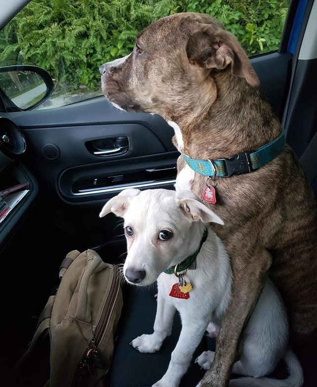 Dear Humane Society I Just Thought I D Share This Image Of My Dog And Peanuts The White One Whom We Adopted About A Month Humane Society Dogs Animal Shelter