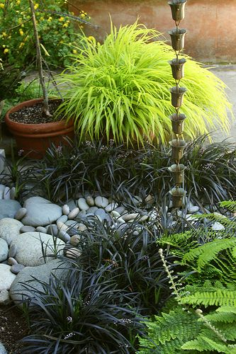 Rain chain with Hakonechloa macra 'Aureola' (Golden Japanese forest grass), black Mondo grass & ferns, perfect for shady areas!