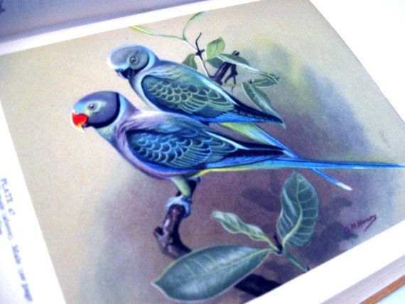 Indian Hill Birds by Salim Ali RARE First by ladyfranslibrary