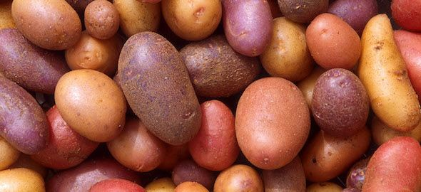 First things first. Here's a search link to find all the potato diet posts and thousands of comments from a …