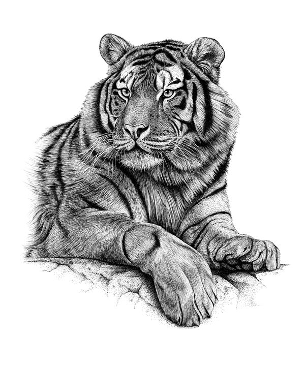 pen and ink drawings of animals - Google Search
