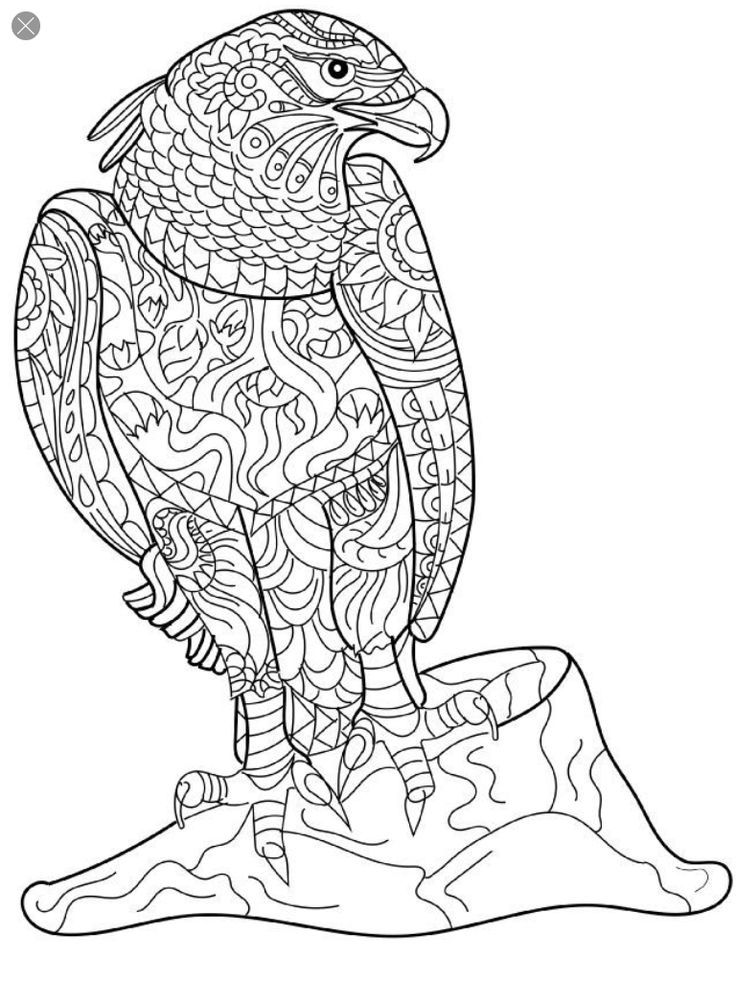Pin By Jarda On Coloring Bird Coloring Pages Coloring Books Colouring Pages