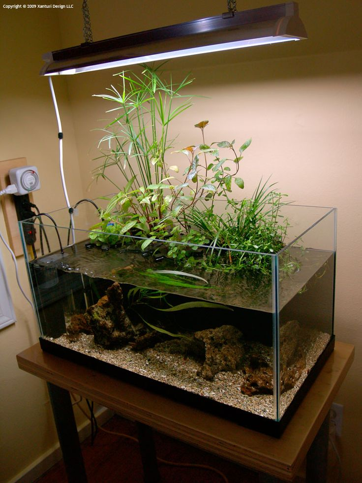 15 Gallon Riparium Planted Aquarium Aquatic Garden
