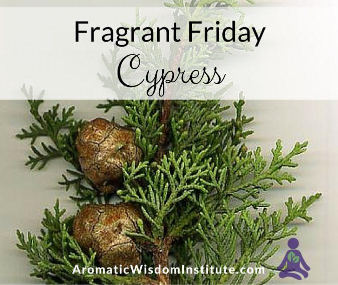 Fragrant Friday: Cypress (Cupressus sempervirens) | Aromatic Wisdom Institute|Essential Oil Education|Aromatherapy Certification|Liz Fulcher
