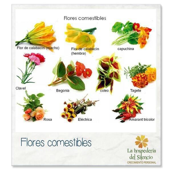 Flores comestibles agricultura pinterest for Nombres d plantas ornamentales