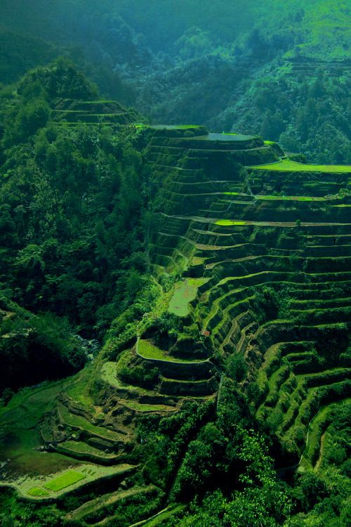 17 best images about banaue rice terrace philippines on for Where is terrace