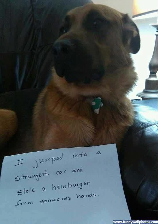 grounded. Lol how do u not love dogs.