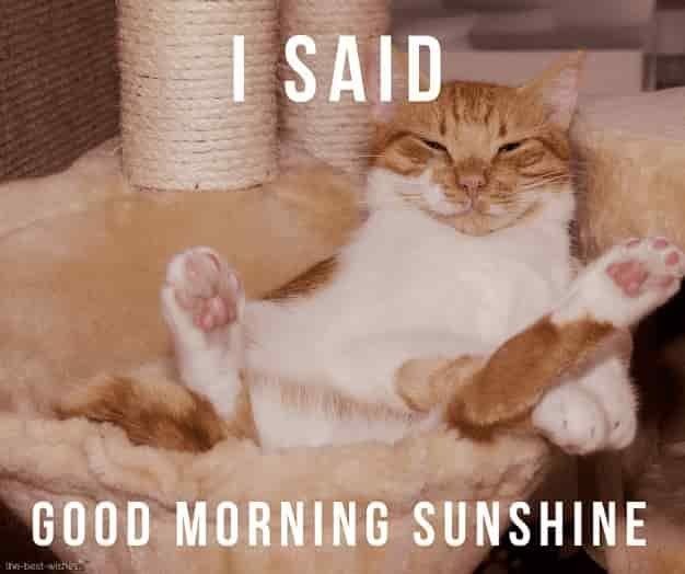 Cute Good Morning Sunshine Meme Best Collection Good Morning Sunshine Funny Dog Images Cute Good Morning
