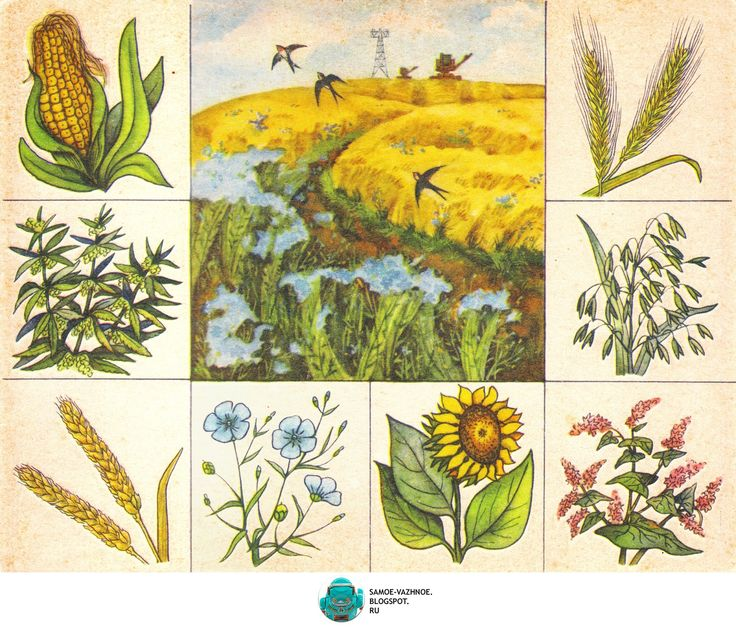 Ботаническое лото Зелёный друг СССР Лото для детей
