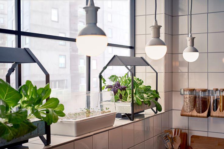 Серията KRYDDA/VÄXER включва основните неща, които са необходими, за да започенш с градинарството у дома – семена, цилиндри с растителна среда, оранжерии, етажерки за растения, тор, камъчета, конзола и LED лампа за растения.  http://www.ikea.bg/indoor-gardening/growing-cultivators/growing-kits/60758/87428/