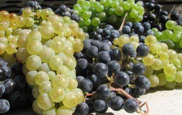 BÜkKalja Hungarian Wine
