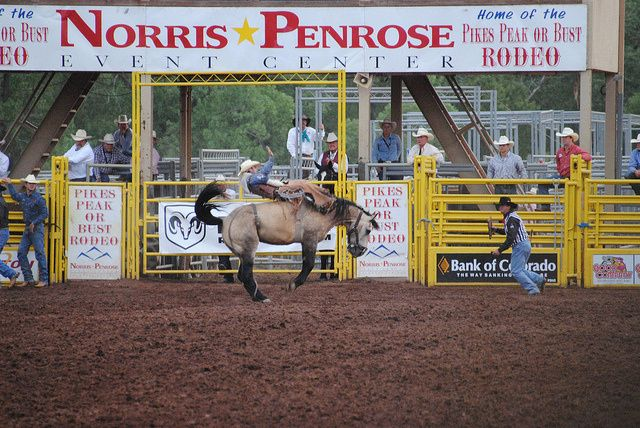 Colorado Springs Trivia – Pikes Peak or Bust Rodeo Did you know? There are 500 cowboys at the Pikes Peak or Bust Rodeo?