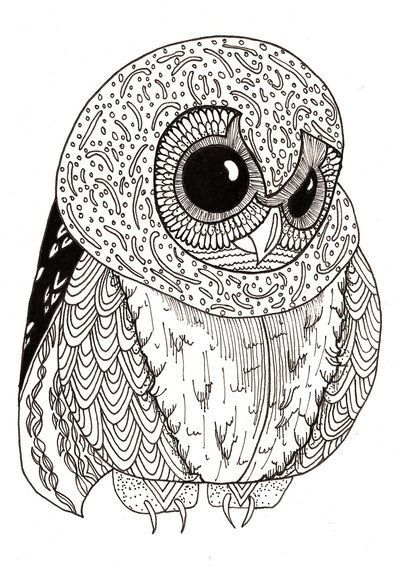 Cute Little Owl Adult Coloring Page