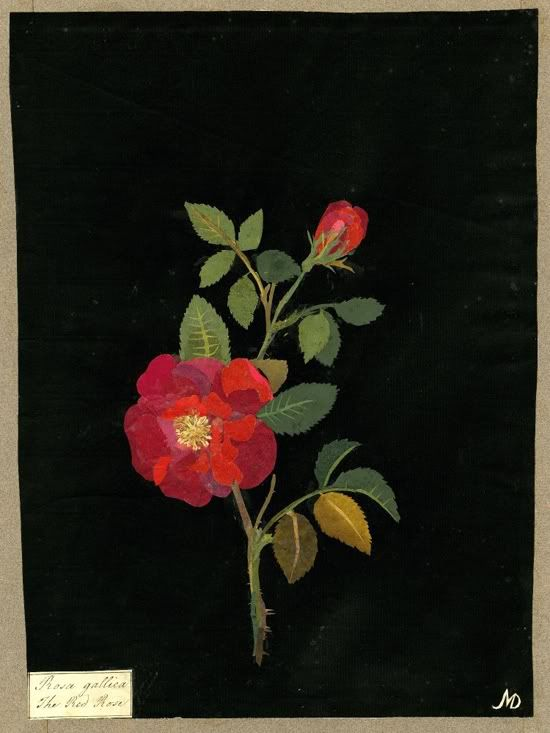 Paper mosaick by Mary Delany. One day, I will see her works exhibited in the Enlightenment Gallery of the British Museum